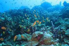 maldives-tropical-reef-fish12[1]